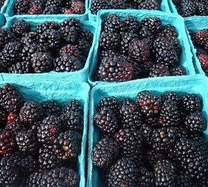 Rosborough thorny blackberry