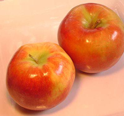 Ambrosia Apple fruit trees